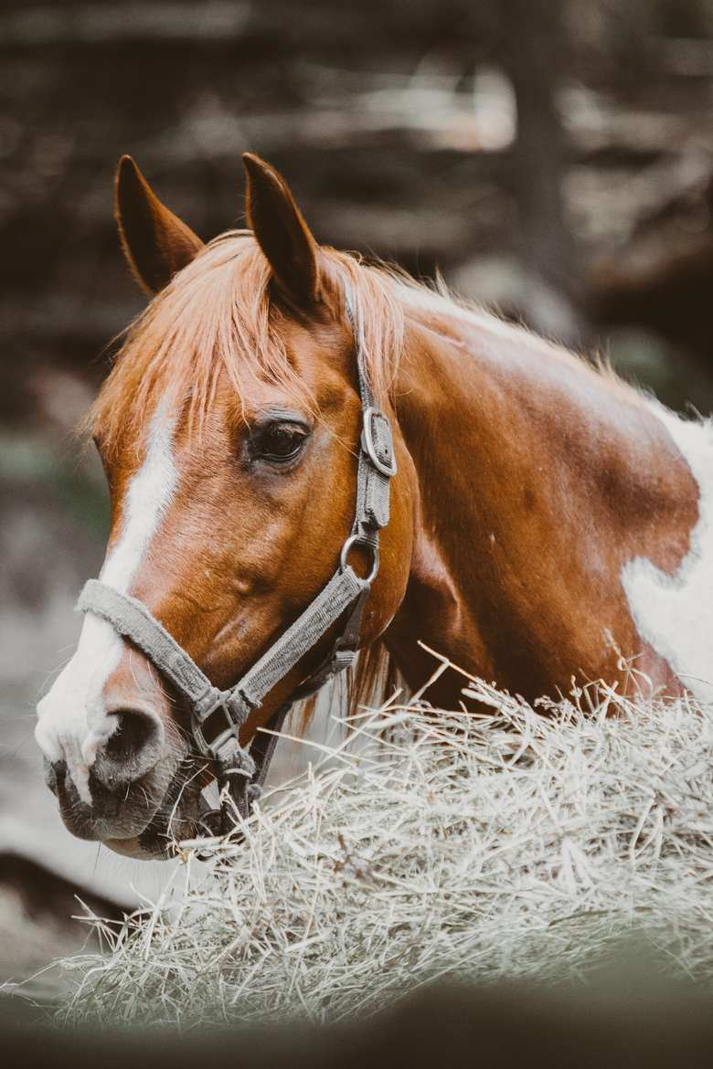 view of horse's face