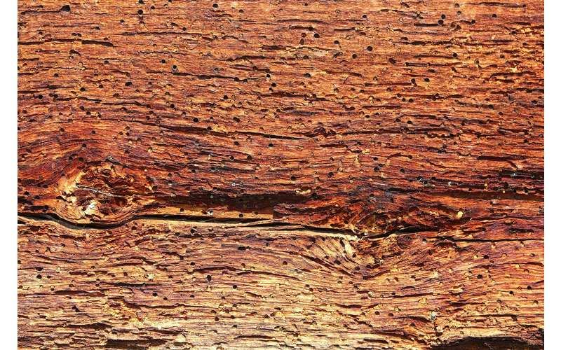 termite holes in a piece of wood