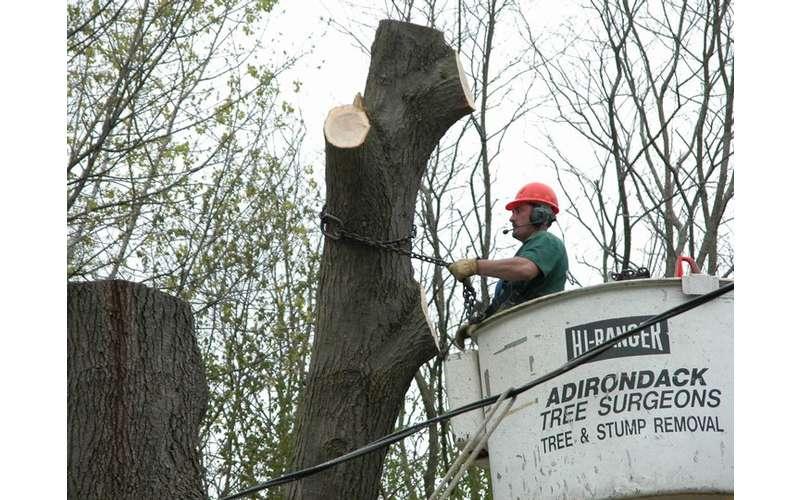 Adirondack Tree Surgeons Inc (6)