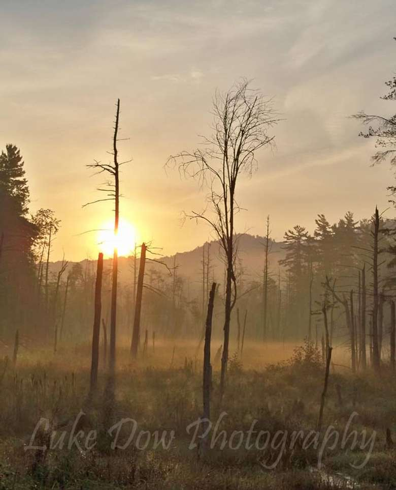 old trees spread across a misty landscape with the sun shining behind a mountain in the background