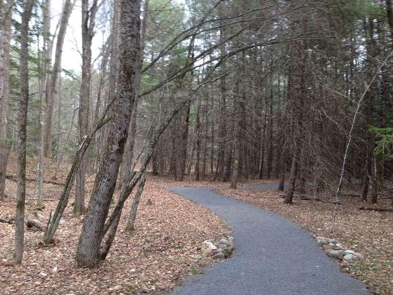 asphalt trail winding through the forest