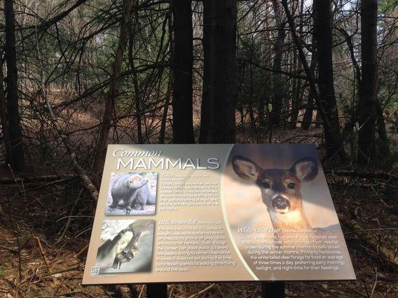 informative signage describing common mammals found in this area