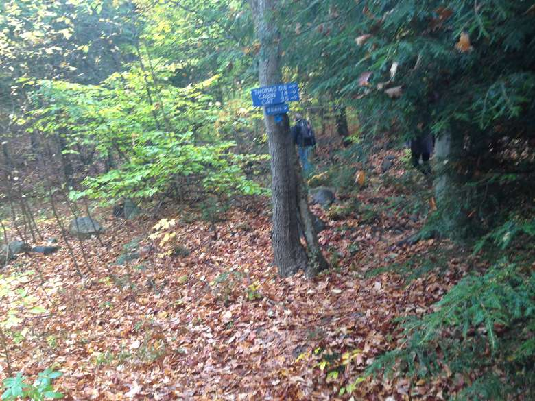 a blue trail sign nailed to a tree