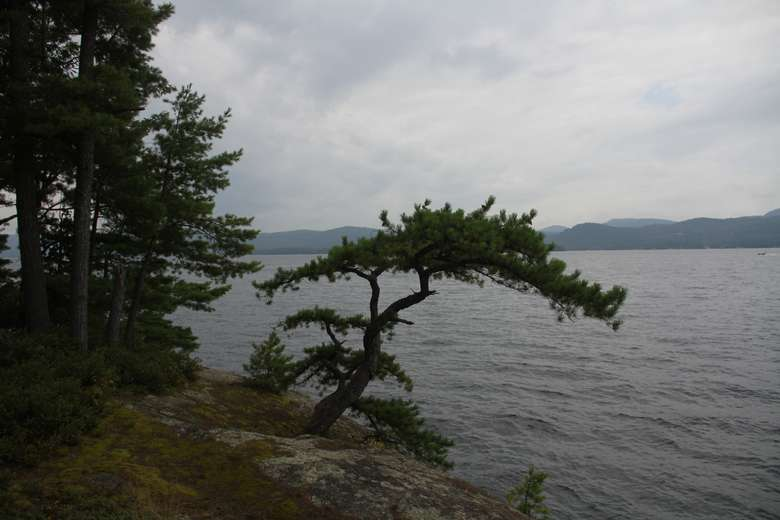 a small tree coming out of a rocky cliff overlooking the water