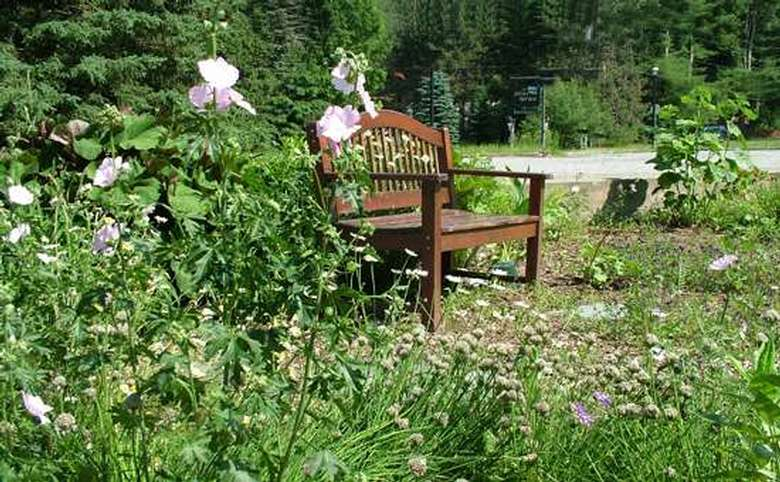 Bench among flowers
