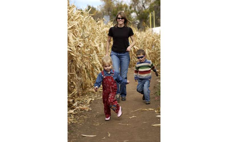 woman walking through corn field with boy and girl