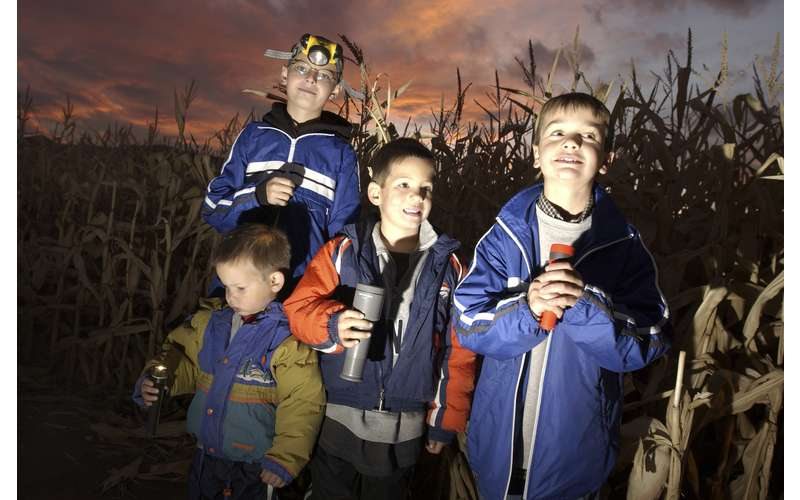 boys with flashlights in a corn maze at night