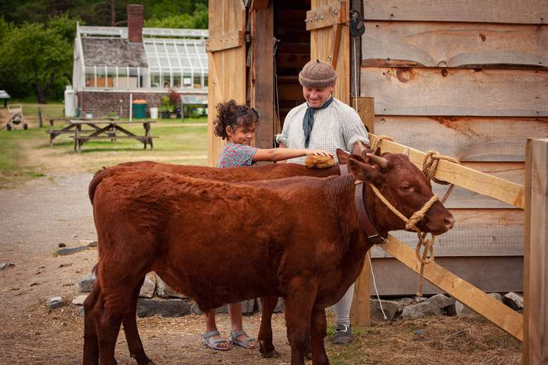 young girl with interpreter brushing oxen