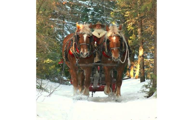 a horse-drawn sleigh making its way down a trail