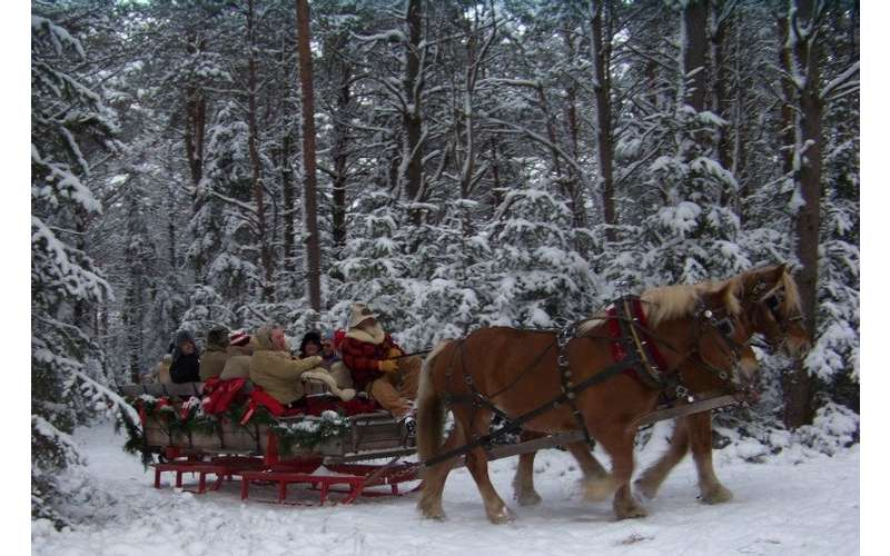 horses pulling a sleigh with people in a snowy part of the forest