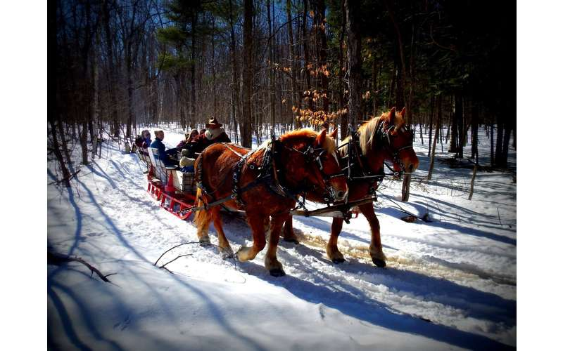 a horse-drawn sleigh ride through snowy woods