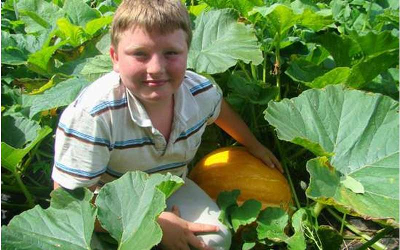 Boy in a pumpkin patch with a pumpkin