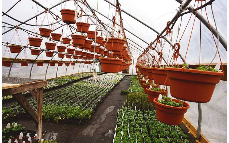 hanging plants in a nursery