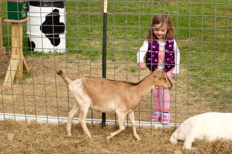 girl petting a goat through a fence
