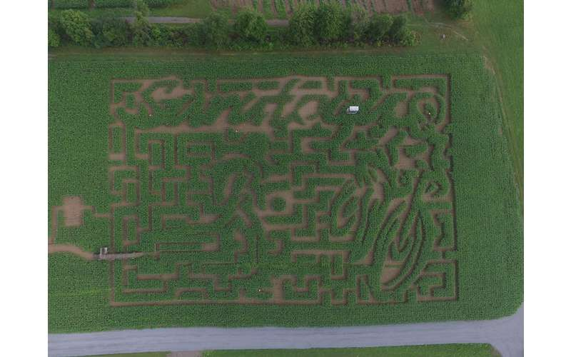 Make your way through the Amazing Maize Corn Maze!