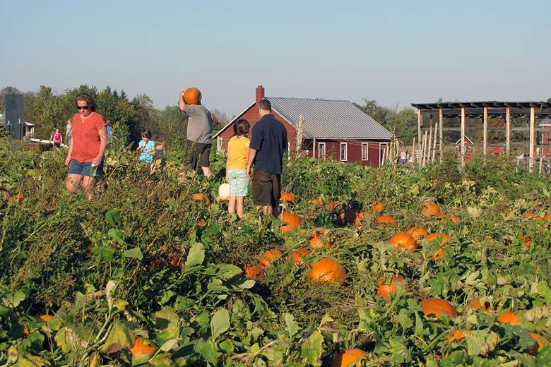 family looking for the perfect pumpkin in a pumpkin patch