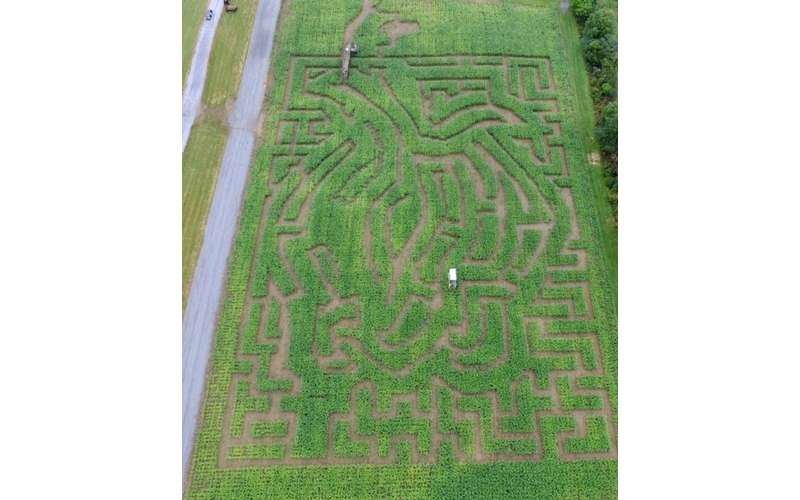 You'll have a blast finding your way out of the corn maze.