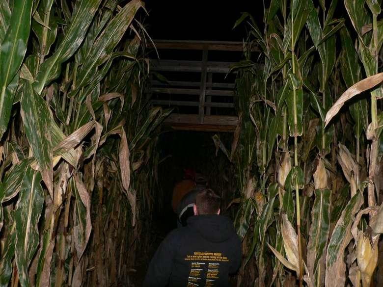 people walking through a corn maze at night
