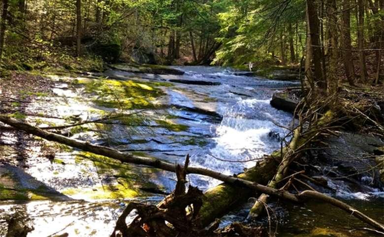 stream in the woods of the Adirondacks