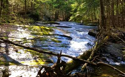 stream in the woods of the Adirondacks