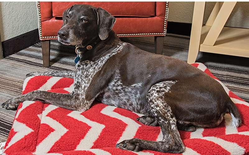 Outward Hound pet-friendly program
