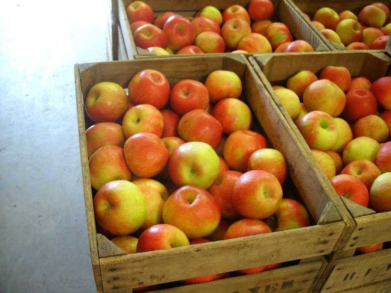 Bowman Orchards (2)