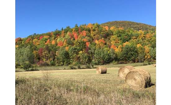 bales of hay in a field in the fall