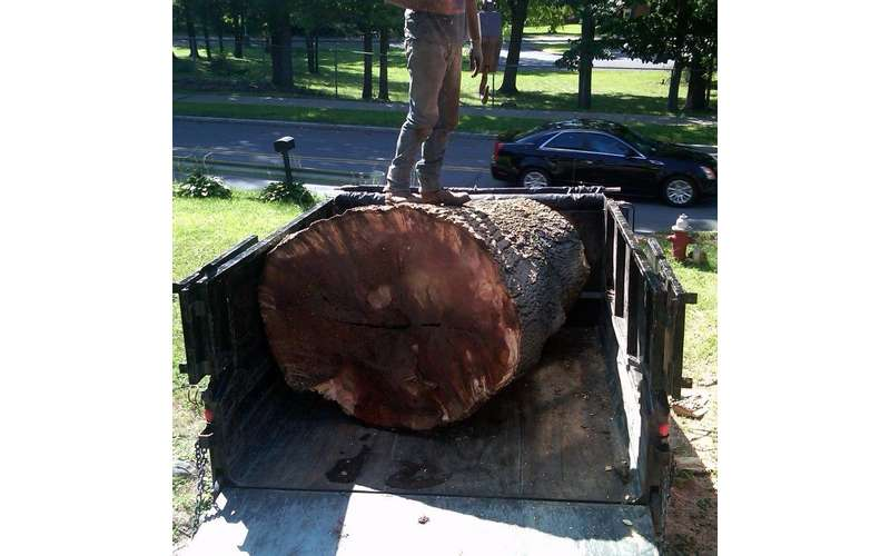 C&D Stump & Tree Removal has the expertise to remove huge trees in Albany, Clifton Park, Troy, & Schenectady