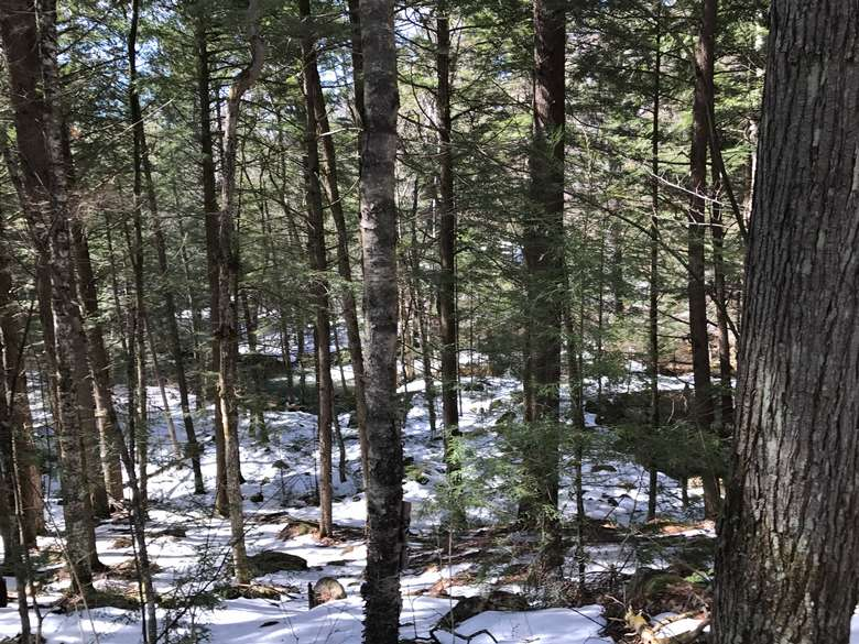 view of the woods from a hiking trail
