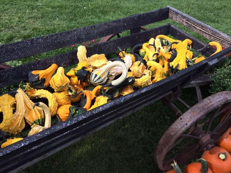 a large wagon full of squash