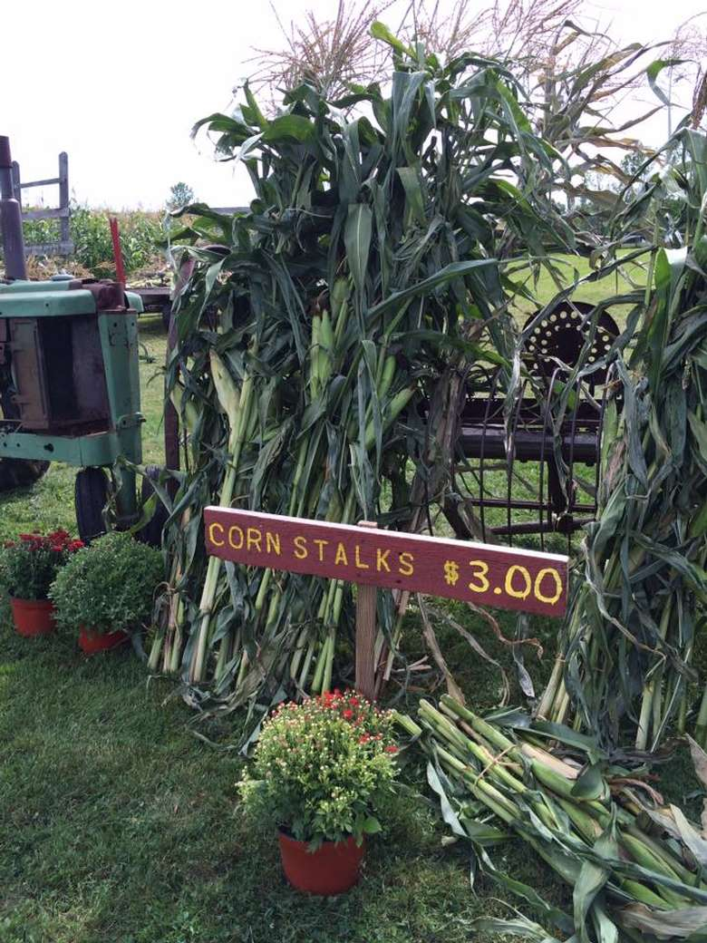 corn stalks for sale