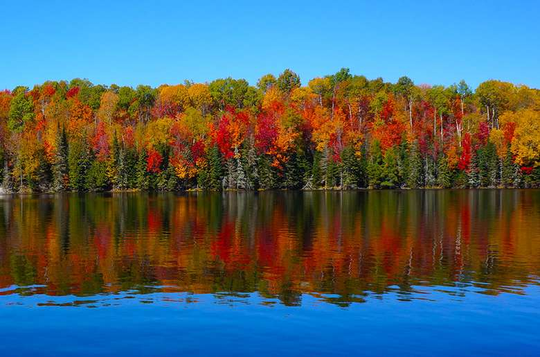 trees with fall foliage reflecting in the lake
