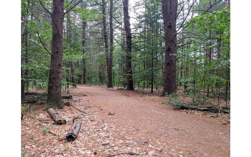Rush Pond Way Trail (2)