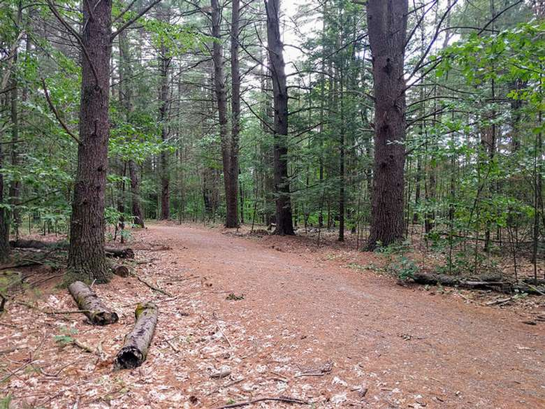 Rush Pond Way Trail (2)