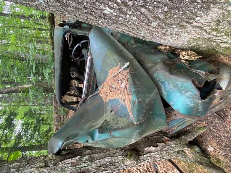 Old rusty car crashed into trees at Rush Pond an interesting sight.