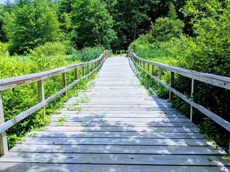 pathway in woods