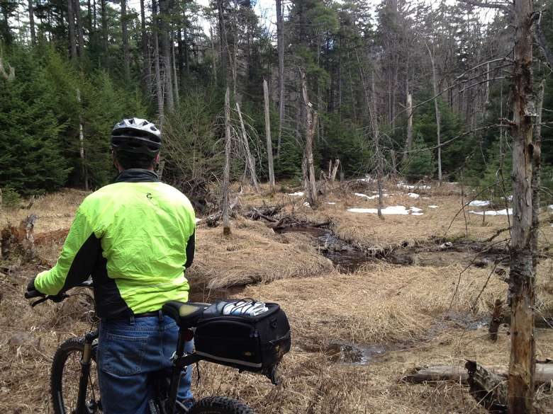 a mountain biker looking into the woods