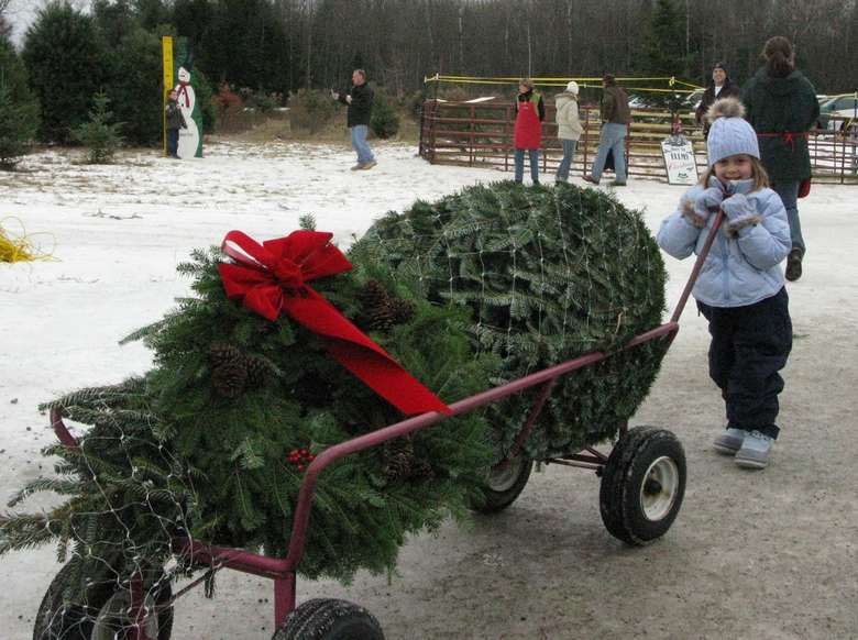 a girl holding onto a cart with a big christmas tree