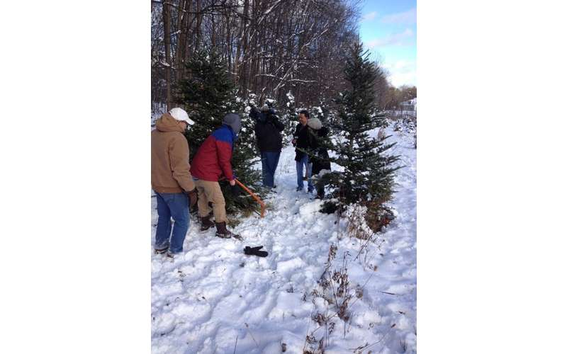 a small group working on cutting down a christmas tree