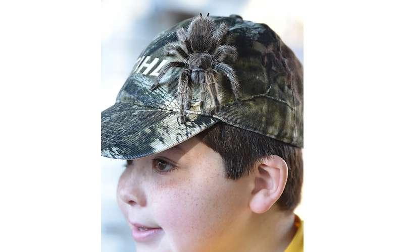 little boy with tarantula on his hat