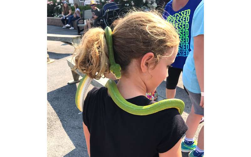 little girl with green snake wrapping itself in her hair
