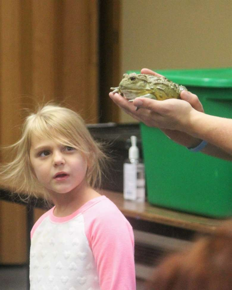little girl looking at a frog