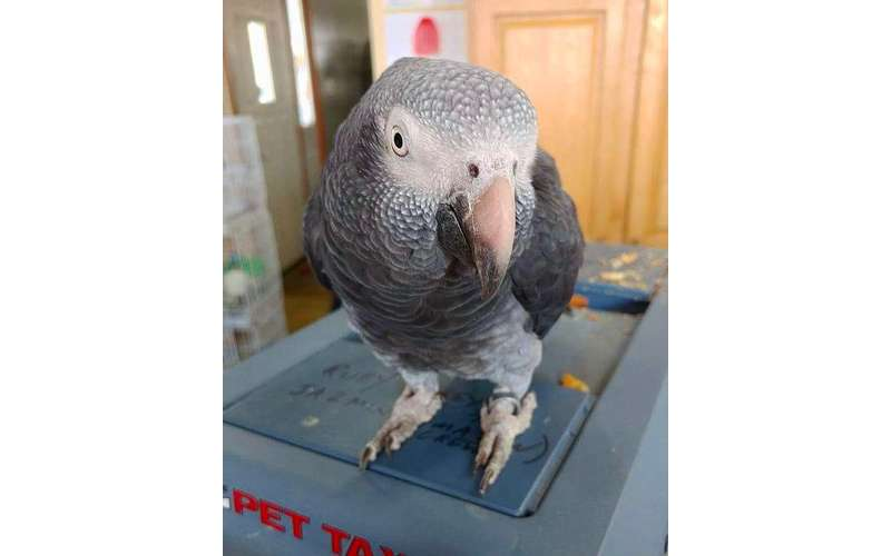 Our animal show also includes Pepper the African grey parrot!