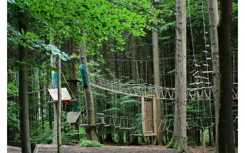 rope bridges and platforms spread across a forest canopy