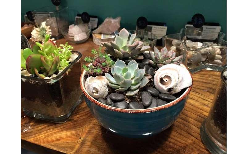 succulent plants in a pot