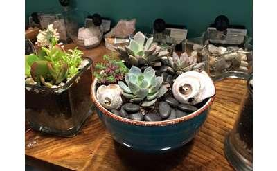 succulent plants in a pot
