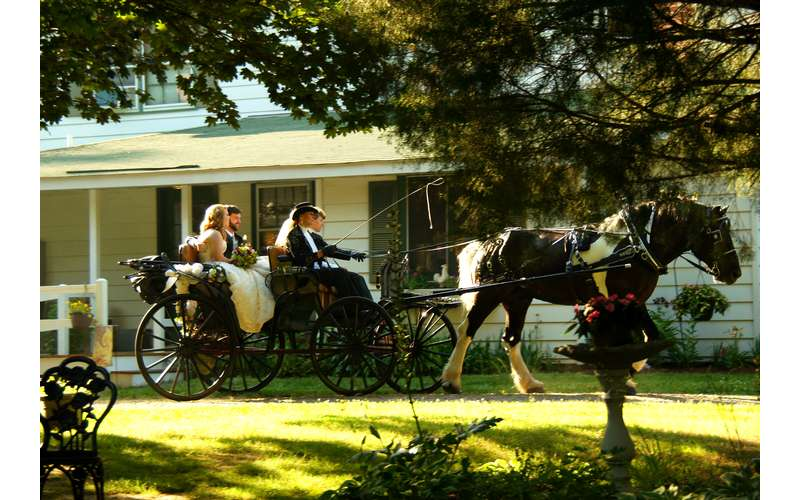 wedding couple in a horse drawn wagon