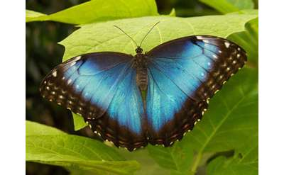 a blue and black butterfly