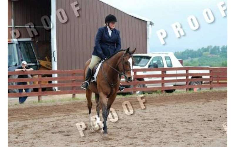 Riding Instructor Whitney Mulqueen showing Wesley at a Horse Show in NE Pennsylvania