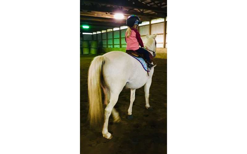 Beginner - Advanced Adults and Children Taught on wonderfully trained lesson ponies and horses